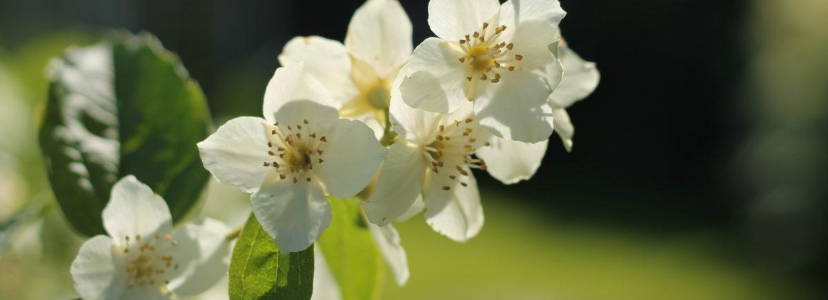 Puutarhan KESÄ™ -lannoite