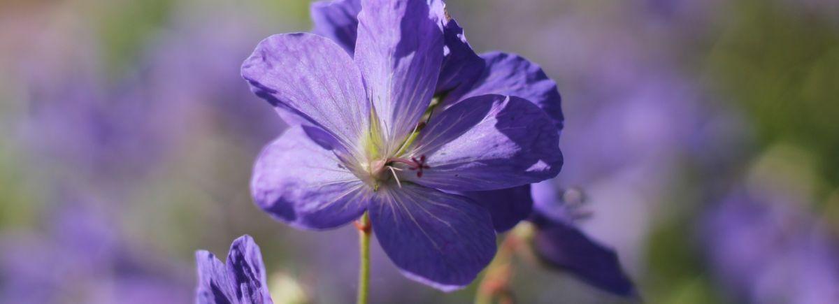 Nurmikon kevätlannoitus mahdollistaa kauniin viheralueen