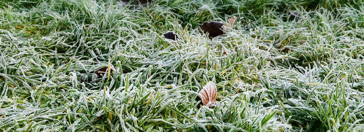 Nurmikon talvi: 5 asiaa nurmikon talvesta, jotka sinun pitää tietää!