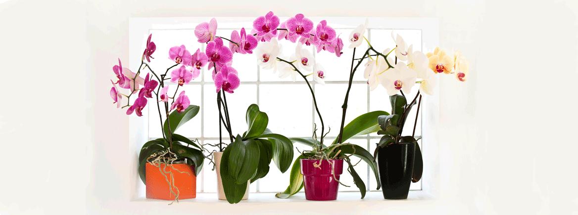 5 asiaa orkidean hoidosta, jotka sinun pitää tietää!