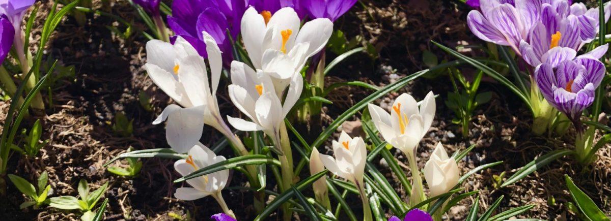 Aurinkoinen kevätpäivä puutarhassa!
