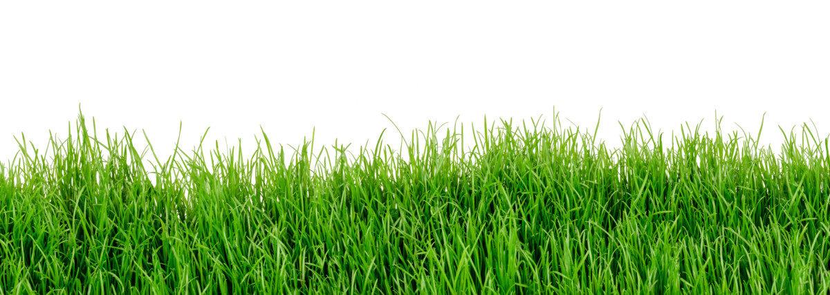 Puutarhan kalkitseminen lisää kasvua ja edistää kasvien hyvinvointia