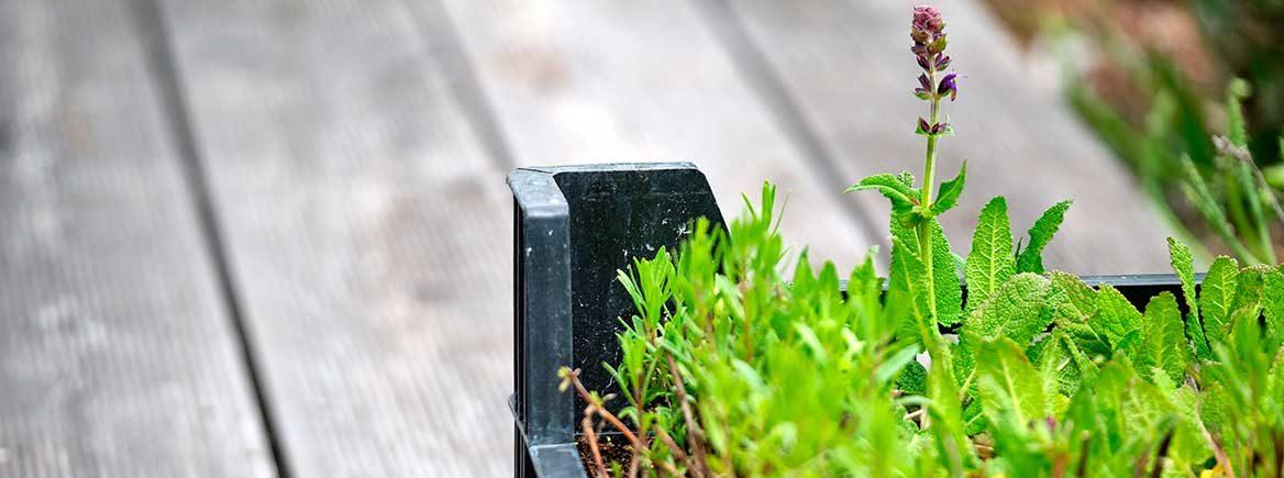 Pihan ja puutarhan istutusten parannus kesän kynnyksellä